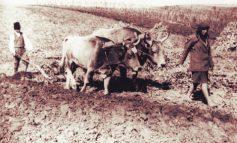 Caminul Cultural si mica proprietata agricola (1939)