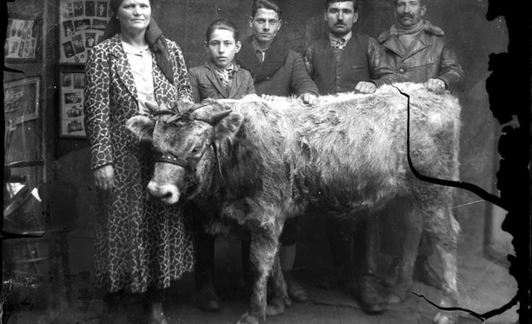 La bivolarii basarabeni de la marginea Bucureştilor