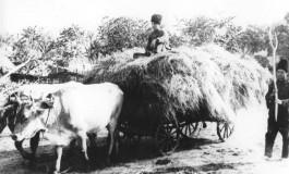 Excedentul populatiei agricole si perspectivele gospodariei taranesti (1937)
